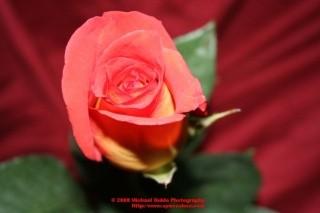 valentines_36